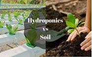 Picture of Hydroponics vs Soil