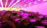 Picture of How to Shop for Grow Lights for Indoor Gardening