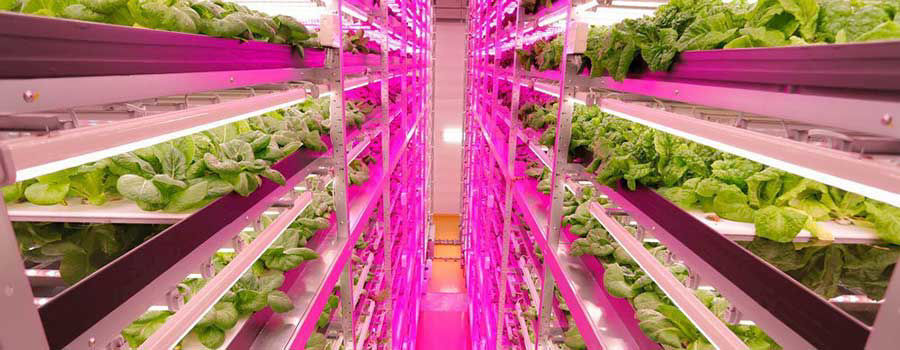How to Shop for Grow Lights for Indoor Gardening