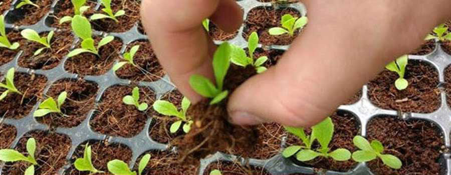 Grow Plants Hydroponically from Seeds
