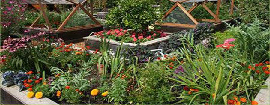 Tại sao nên làm vườn tại nhà?