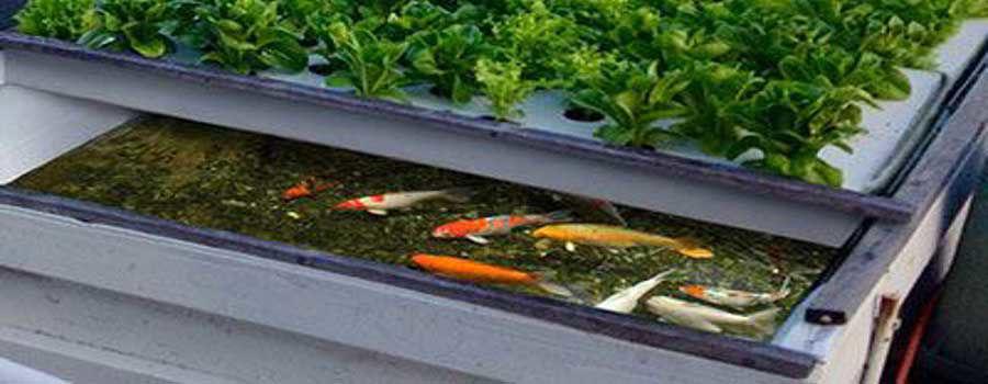 Vì sao nên tự xây hệ thống rau xanh cá sạch