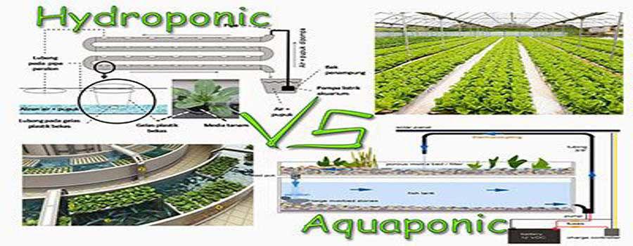 Choosing between hydroponics and aquaponics