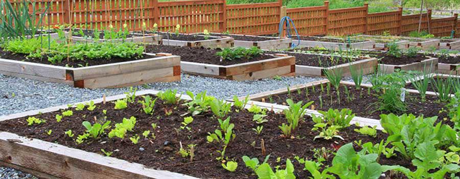 Những lợi ích của vườn tại nhà