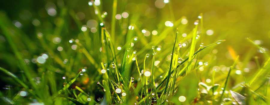 Is lawn fertilizer good for vegetables?