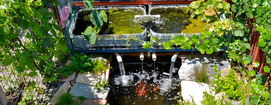 How to make an aquaponics pond system