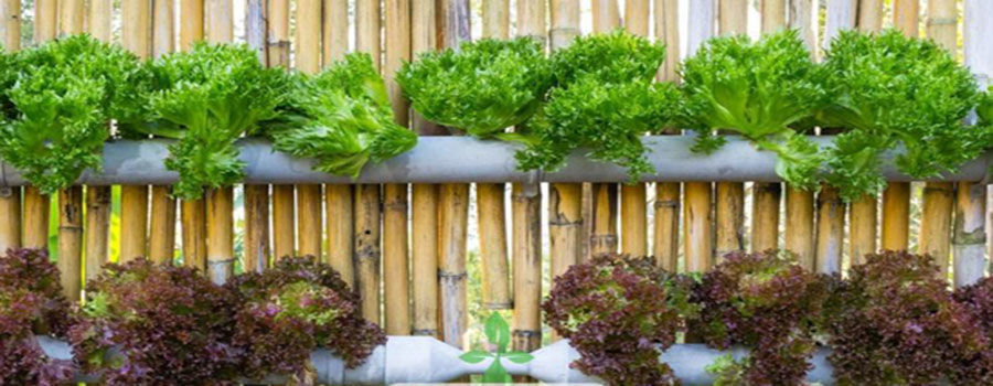 How to setup a homemade hydroponics system