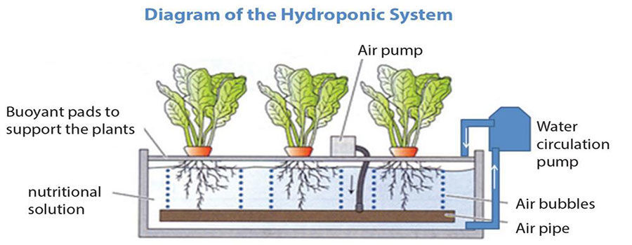 Major Difference Between Hydroponics, Aeroponics, and Aquaponics